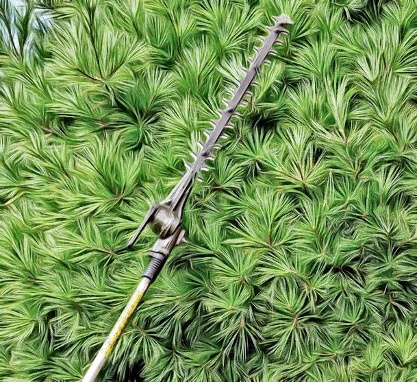 pole saw vs chainsaw